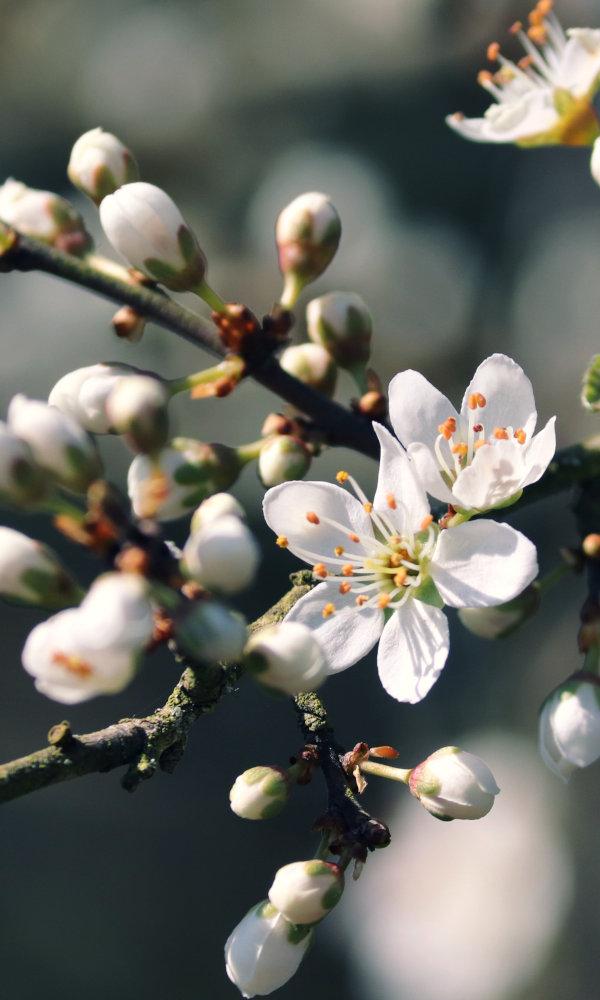 Frühjahrstagundnachtgleiche, Ostara, Ostern Begleitung von Schamane Gerhard Zirkel